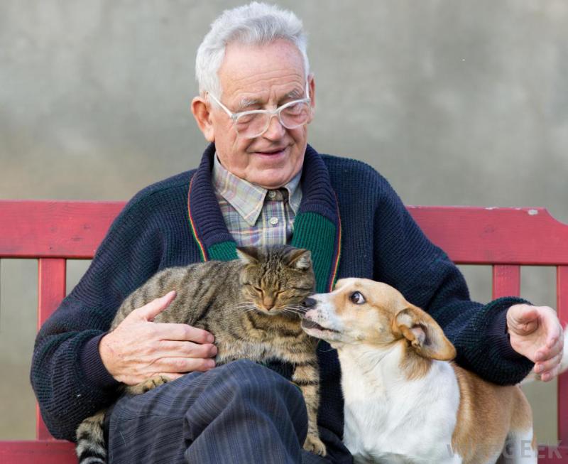 Зоотерапия для пожилых людей